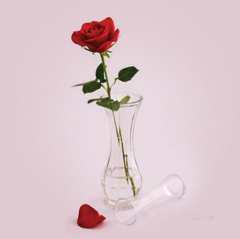 A red rose in a glass vase with another, smaller, glass vase placed on it's side and a single rose petal at the foot.